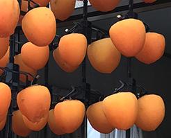 柿のれん(縦吊り式)